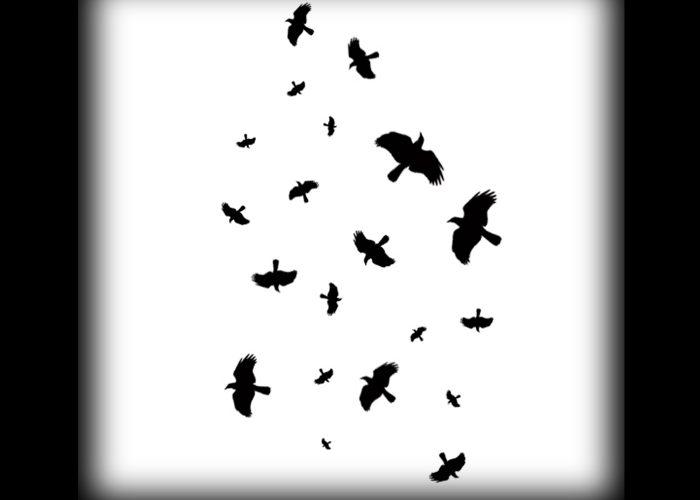 Flock-of-Crows-web