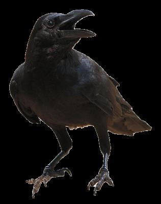 Raven-Review
