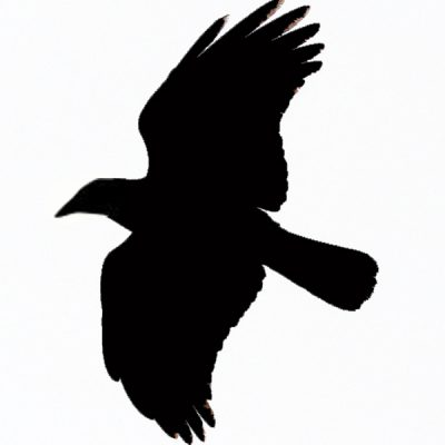 flying crow modified 2
